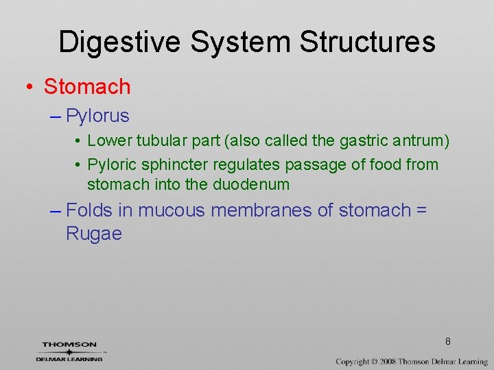 Digestive System Structures • Stomach – Pylorus • Lower tubular part (also called the