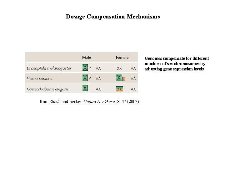 Dosage Compensation Mechanisms Genomes compensate for different numbers of sex chromosomes by adjusting gene