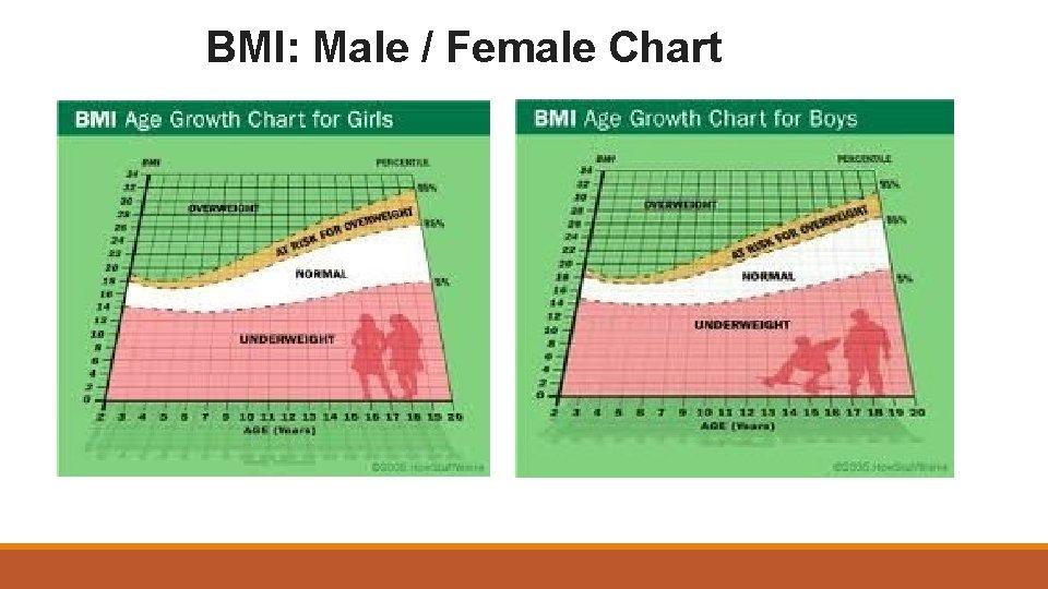 BMI: Male / Female Chart