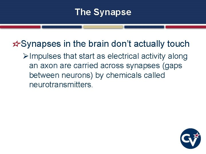 The Synapses in the brain don't actually touch ØImpulses that start as electrical activity