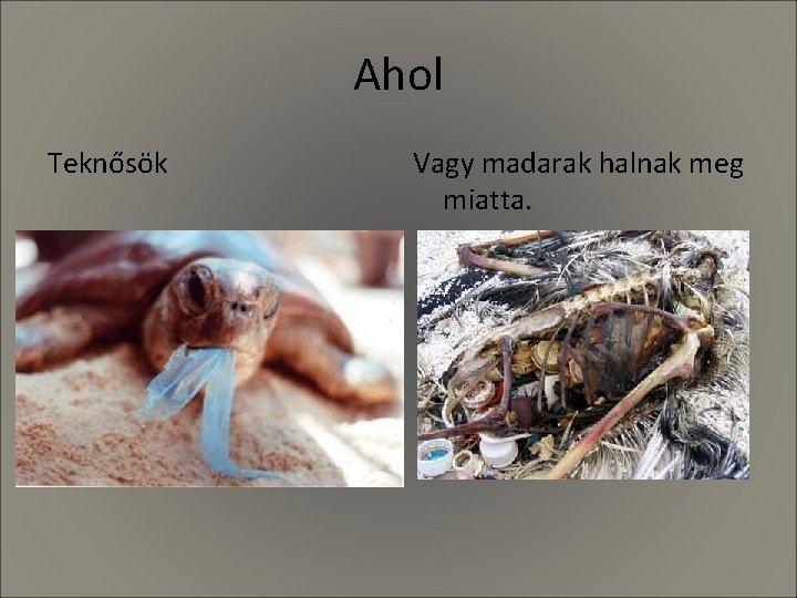 Ahol Teknősök Vagy madarak halnak meg miatta.