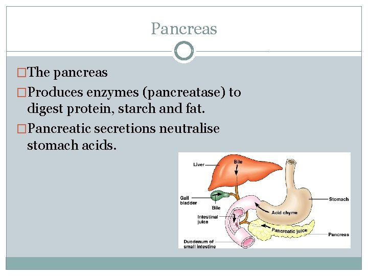 Pancreas �The pancreas �Produces enzymes (pancreatase) to digest protein, starch and fat. �Pancreatic secretions