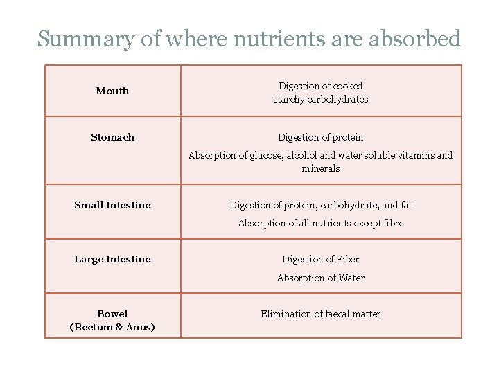 Summary of where nutrients are absorbed Mouth Digestion of cooked starchy carbohydrates Stomach Digestion