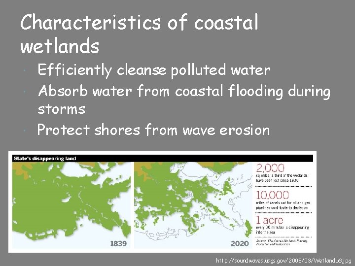 Characteristics of coastal wetlands Efficiently cleanse polluted water Absorb water from coastal flooding during