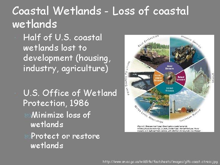 Coastal Wetlands - Loss of coastal wetlands Half of U. S. coastal wetlands lost