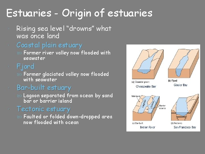 "Estuaries - Origin of estuaries Rising sea level ""drowns"" what was once land Coastal"