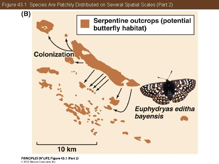 Figure 43. 1 Species Are Patchily Distributed on Several Spatial Scales (Part 2)