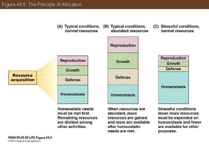 Figure 43. 5 The Principle of Allocation