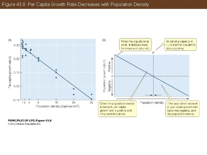 Figure 43. 8 Per Capita Growth Rate Decreases with Population Density