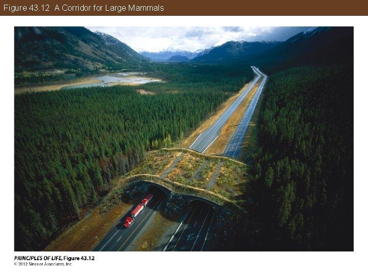 Figure 43. 12 A Corridor for Large Mammals