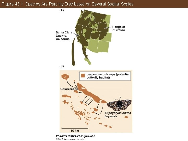 Figure 43. 1 Species Are Patchily Distributed on Several Spatial Scales