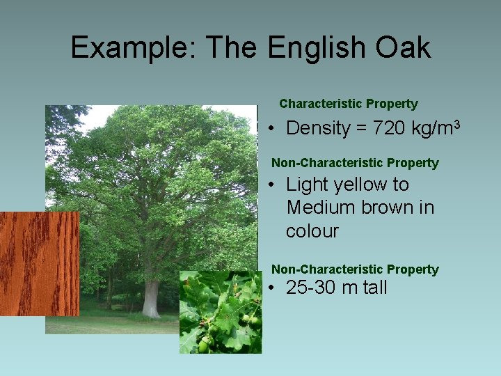 Example: The English Oak Characteristic Property • Density = 720 kg/m 3 Non-Characteristic Property