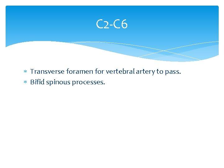C 2 -C 6 Transverse foramen for vertebral artery to pass. Bifid spinous processes.