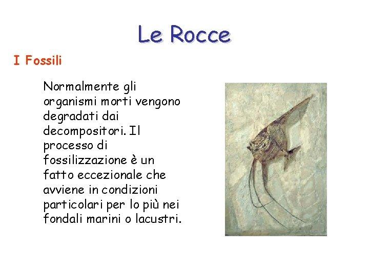 Le Rocce I Fossili Normalmente gli organismi morti vengono degradati dai decompositori. Il processo