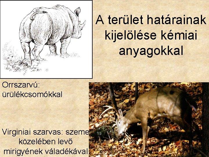 mi az orrszarvú látványa)