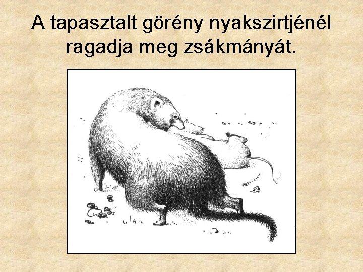 mi a görény látványa)