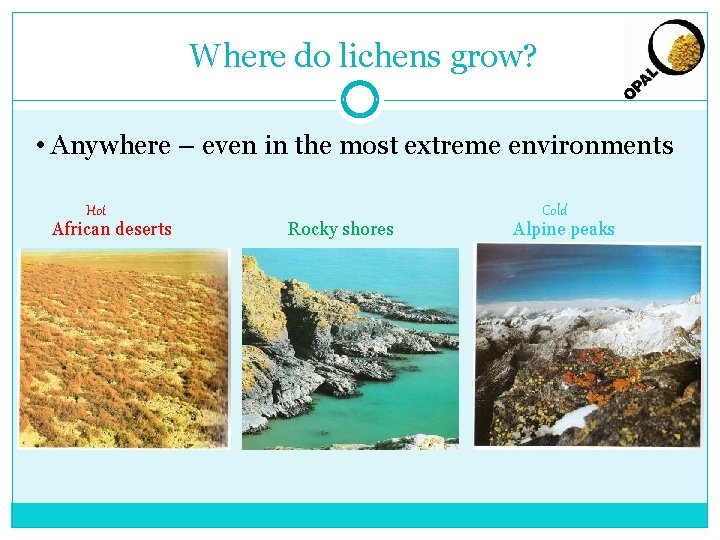 Where do lichens grow? • Anywhere – even in the most extreme environments Hot