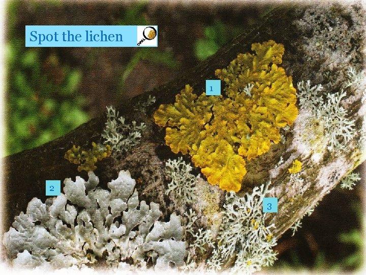 Spot the lichen 1 2 3