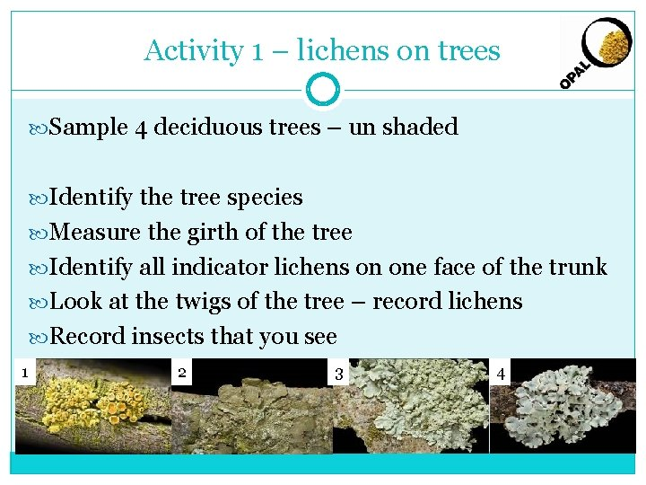 Activity 1 – lichens on trees Sample 4 deciduous trees – un shaded Identify
