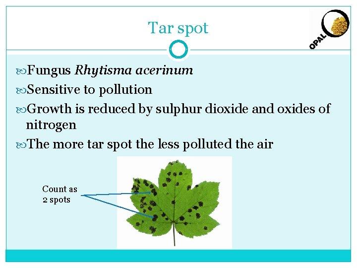 Tar spot Fungus Rhytisma acerinum Sensitive to pollution Growth is reduced by sulphur dioxide