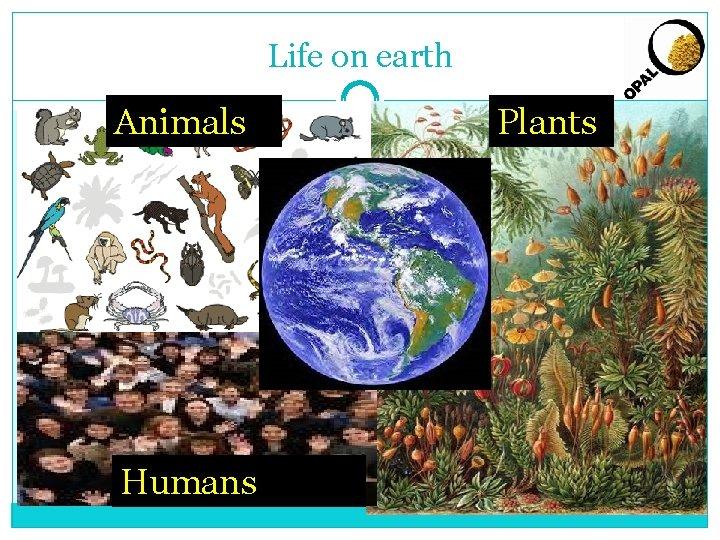 Life on earth Animals Humans Plants