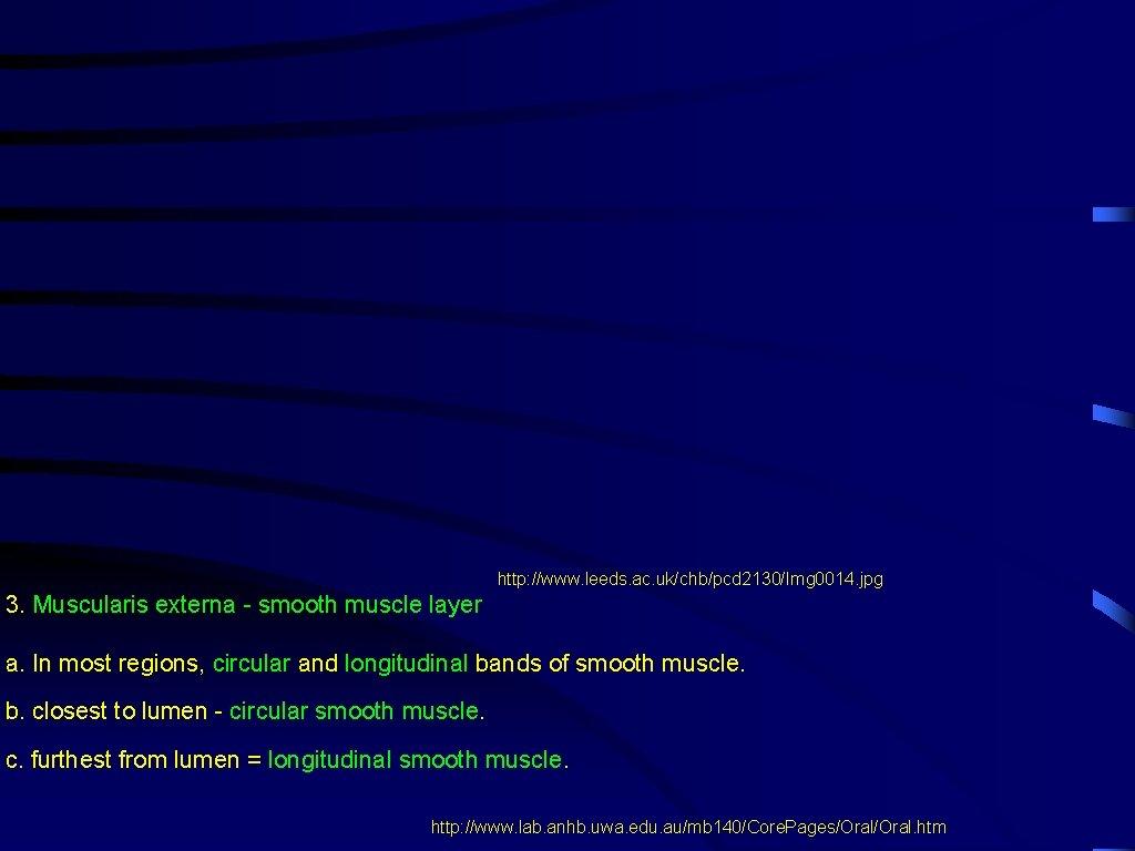 http: //www. leeds. ac. uk/chb/pcd 2130/Img 0014. jpg 3. Muscularis externa - smooth muscle