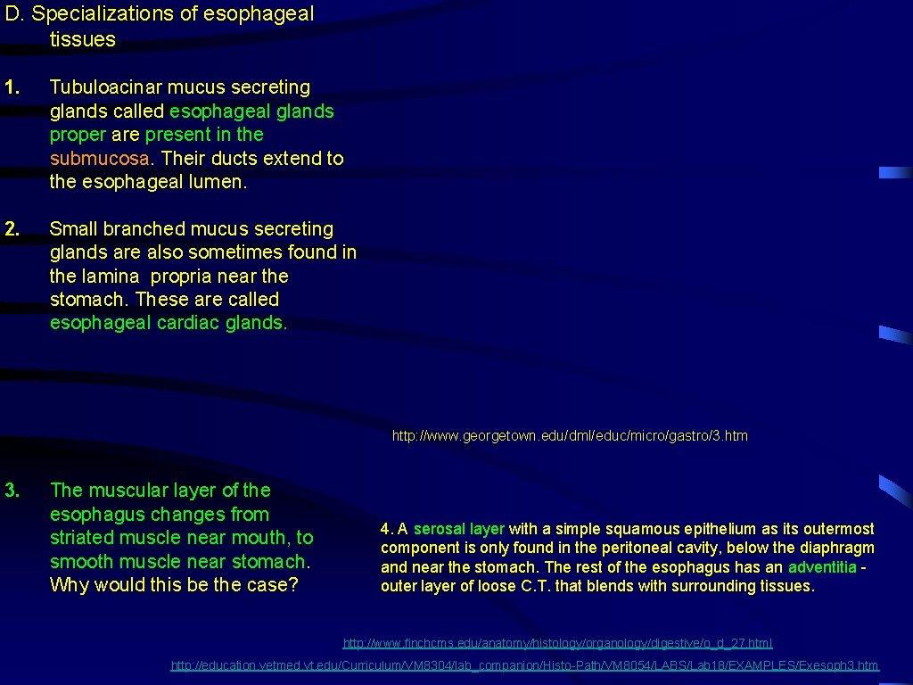 D. Specializations of esophageal tissues 1. Tubuloacinar mucus secreting glands called esophageal glands proper