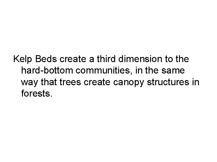 Kelp Beds create a third dimension to the hard-bottom communities, in the same way