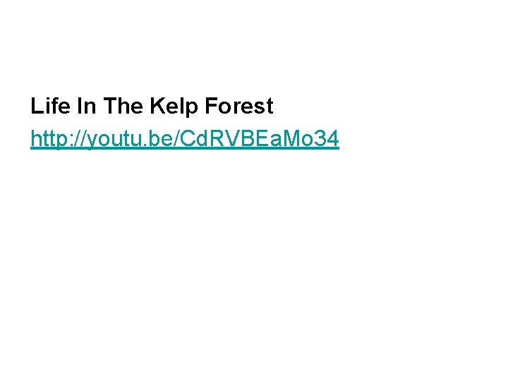 Life In The Kelp Forest http: //youtu. be/Cd. RVBEa. Mo 34
