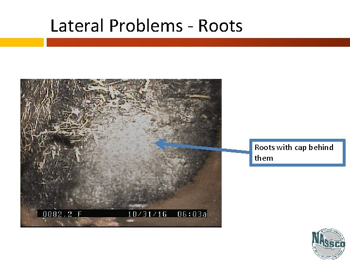 Lateral Problems - Roots with cap behind them