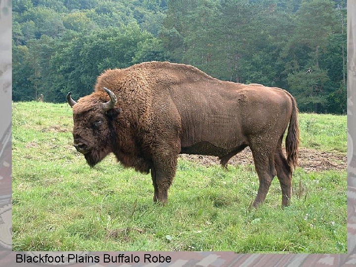 Blackfoot Plains Buffalo Robe