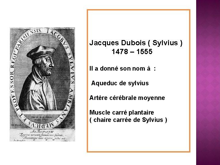 Jacques Dubois ( Sylvius ) 1478 – 1555 Il a donné son nom à