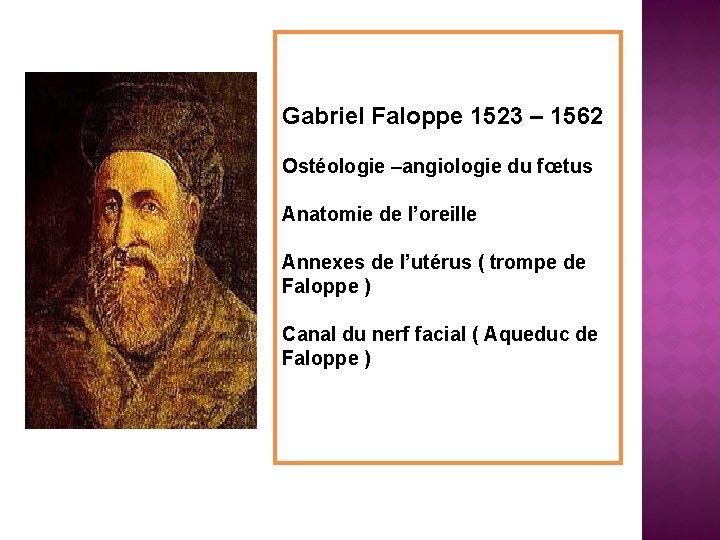 Gabriel Faloppe 1523 – 1562 Ostéologie –angiologie du fœtus Anatomie de l'oreille Annexes de