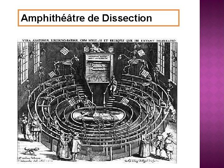 Amphithéâtre de Dissection