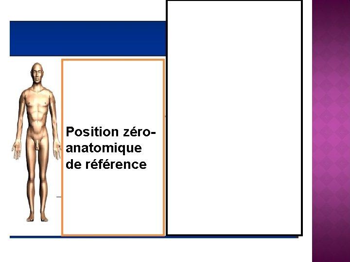 Position zéroanatomique de référence