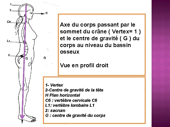 Axe du corps passant par le sommet du crâne ( Vertex= 1 ) et