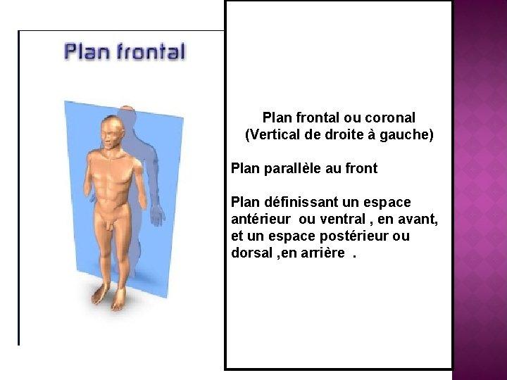 Plan frontal ou coronal (Vertical de droite à gauche) Plan parallèle au front Plan