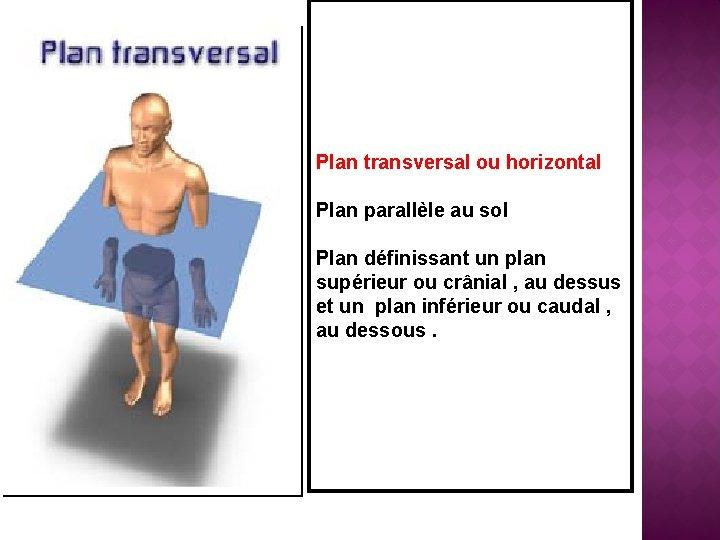 Plan transversal ou horizontal Plan parallèle au sol Plan définissant un plan supérieur ou