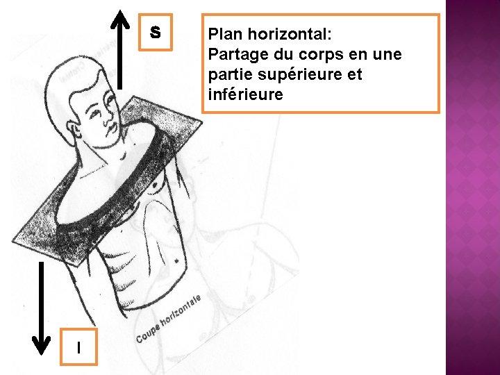 S I Plan horizontal: Partage du corps en une partie supérieure et inférieure
