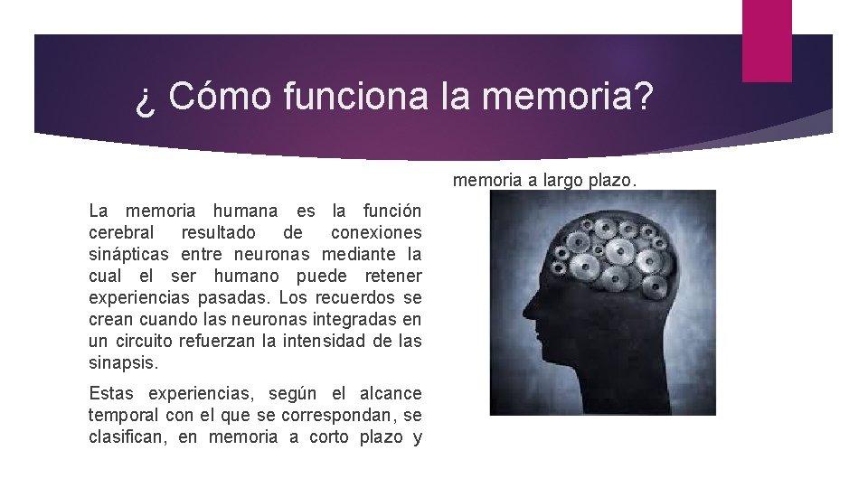 ¿ Cómo funciona la memoria? memoria a largo plazo. La memoria humana es la