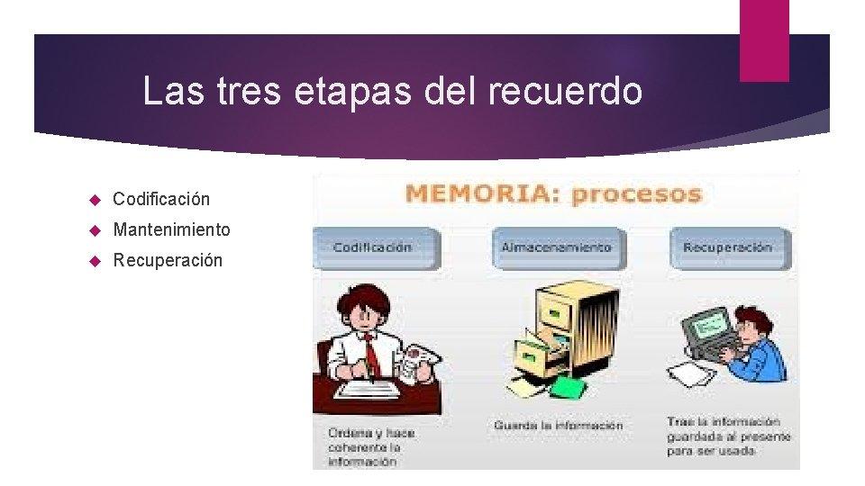 Las tres etapas del recuerdo Codificación Mantenimiento Recuperación