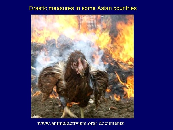 Drastic measures in some Asian countries www. animalactivism. org/ documents