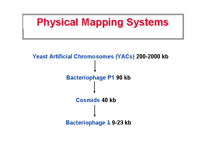 Physical Mapping Systems Yeast Artificial Chromosomes (YACs) 200 -2000 kb Bacteriophage P 1 90