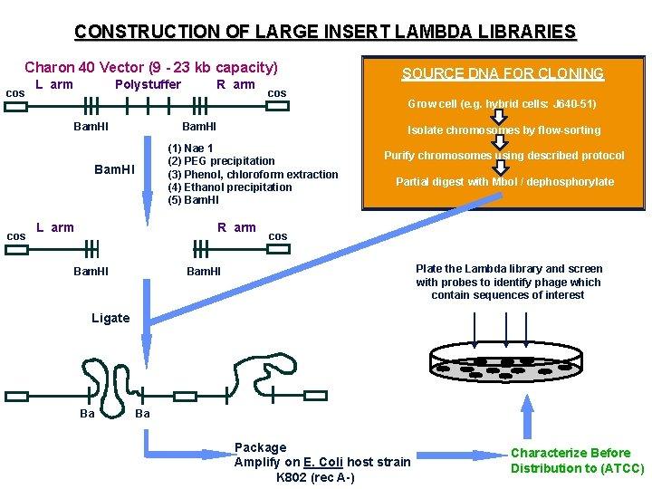 CONSTRUCTION OF LARGE INSERT LAMBDA LIBRARIES Charon 40 Vector (9 - 23 kb capacity)