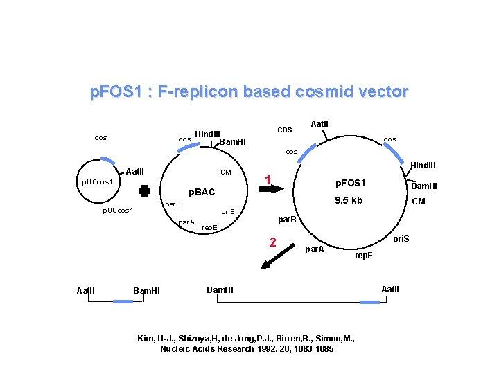 p. FOS 1 : F-replicon based cosmid vector cos cos Hind. III Bam. HI