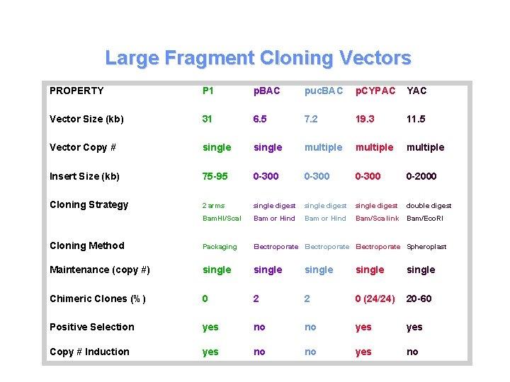 Large Fragment Cloning Vectors PROPERTY P 1 p. BAC puc. BAC p. CYPAC YAC