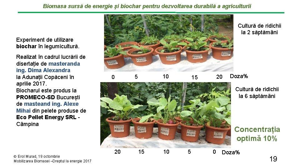 Biomasa sursă de energie şi biochar pentru dezvoltarea durabilă a agriculturii Cultură de ridichii
