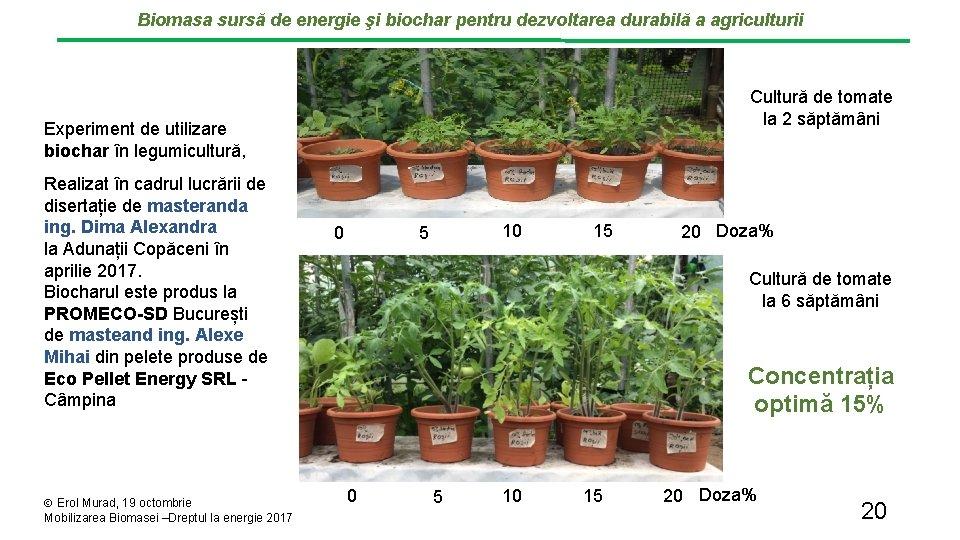 Biomasa sursă de energie şi biochar pentru dezvoltarea durabilă a agriculturii Cultură de tomate