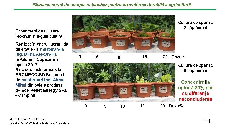 Biomasa sursă de energie şi biochar pentru dezvoltarea durabilă a agriculturii Cultură de spanac