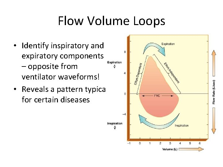 Flow Volume Loops • Identify inspiratory and expiratory components – opposite from ventilator waveforms!